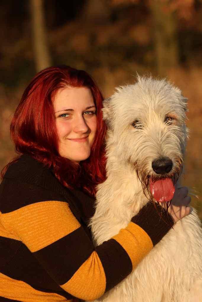 Irský vlkodav - obr s něžným srdcem : PESWEB