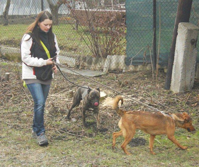 fe24b993168 Trend současnosti  Venčení psů v útulcích   PESWEB