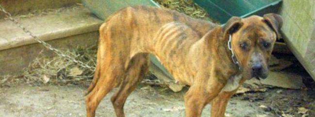 0ad6b70e68f Týrání zvířat - Co můžu dělat    PESWEB