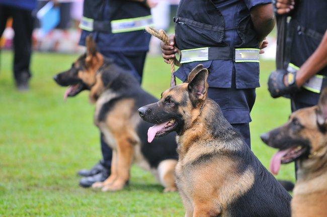 Pes se na cvičišti potká nejen s řadou dalších chlupáčů. A to od malých po 29c1f6d52c