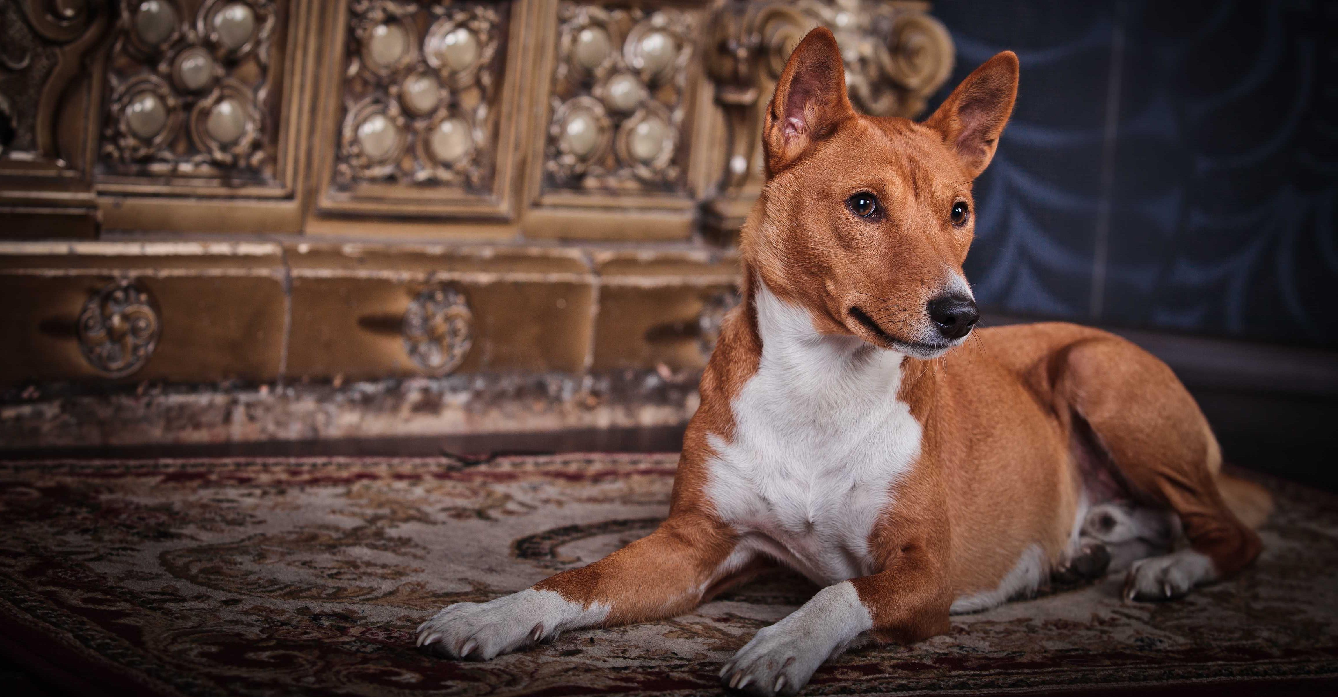 Bolesti kloubů u psů