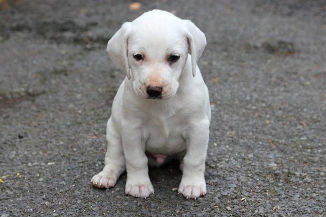ea2a2e1afba Mýty o psech z útulku – bojíme se zbytečně   PESWEB