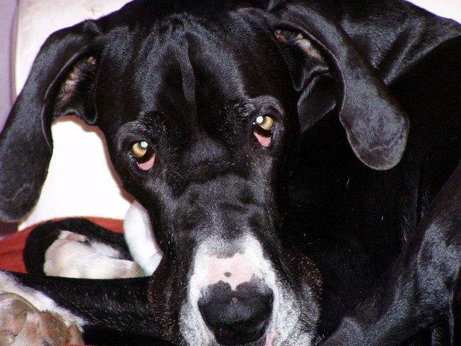 co dát psovi na bolest