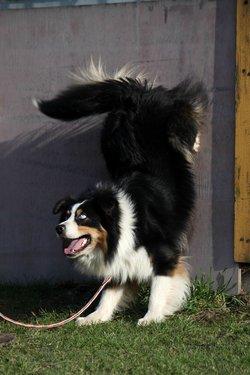 e7a04af1849 Problémový pes snadno a rychle – 11.   PESWEB