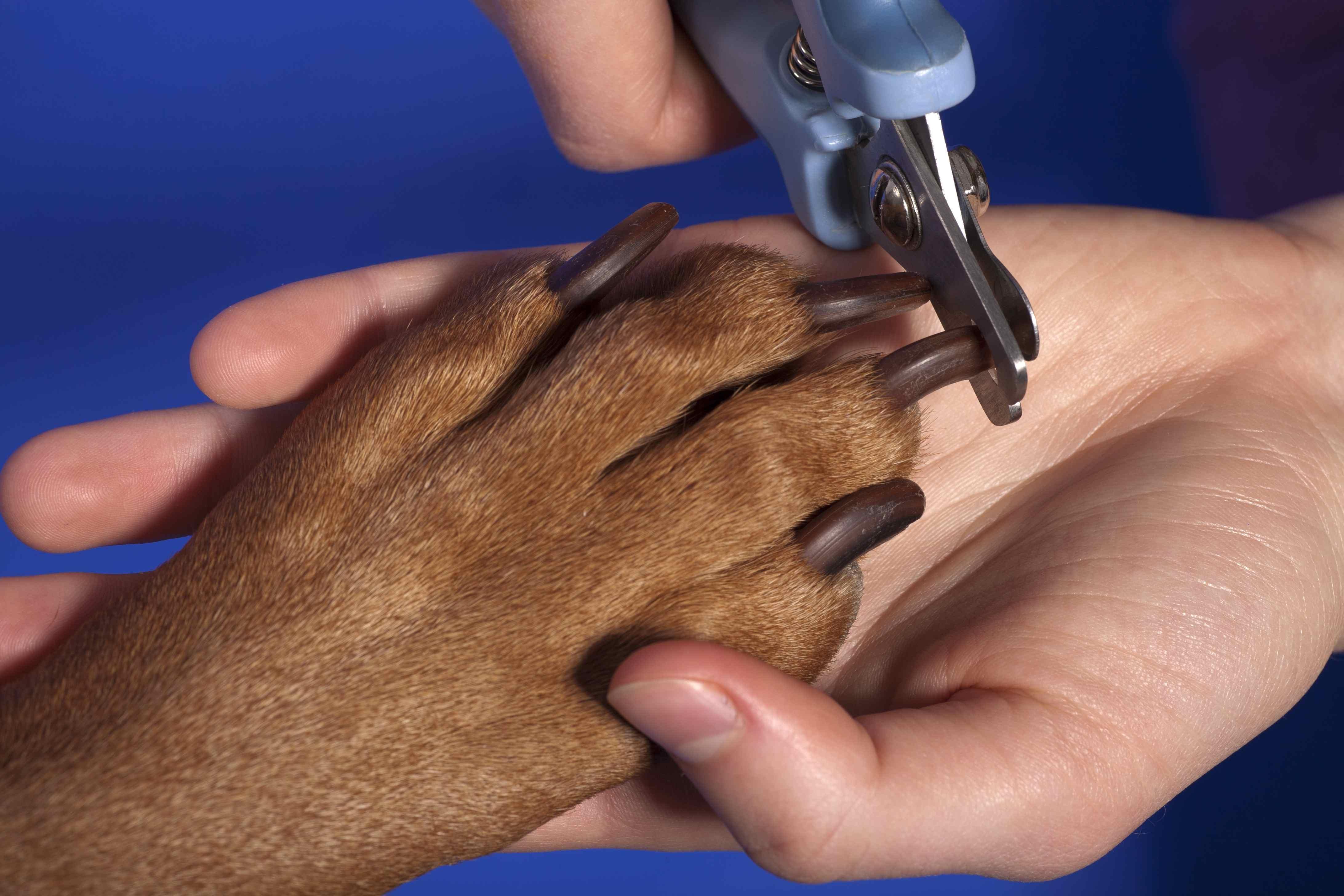 Strihani drapku u psa