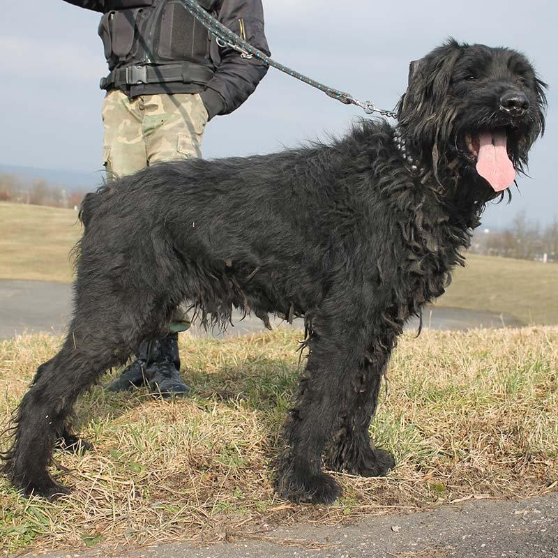 Další psi v útulku Plemeno v útulcích Poptat psa 4663e5035d