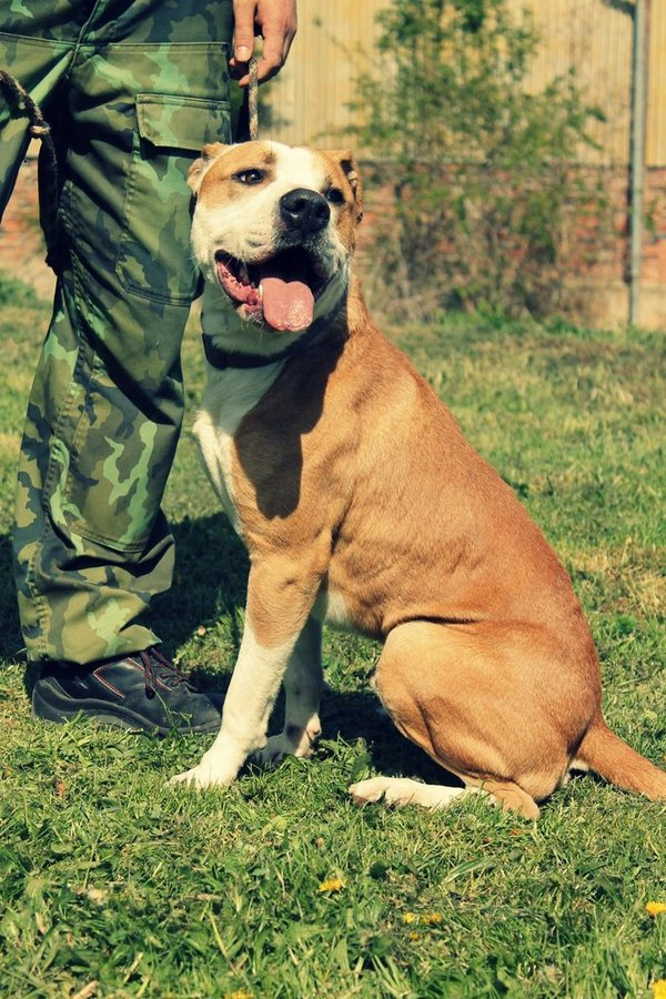 Max - Nalezený pes   PESWEB 471429279b
