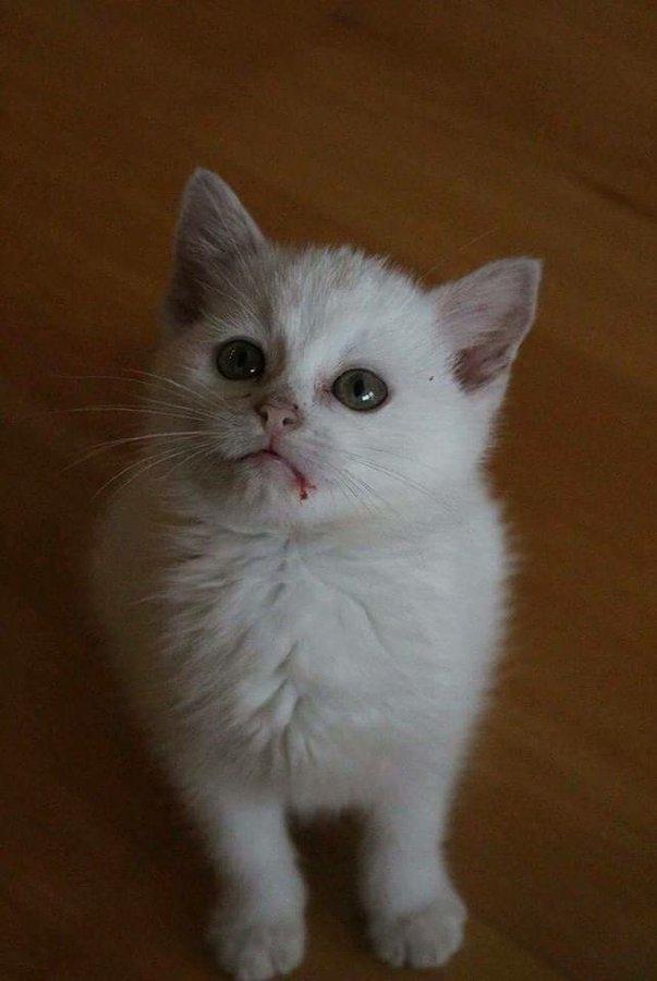 otevřené mokré kočička fotky