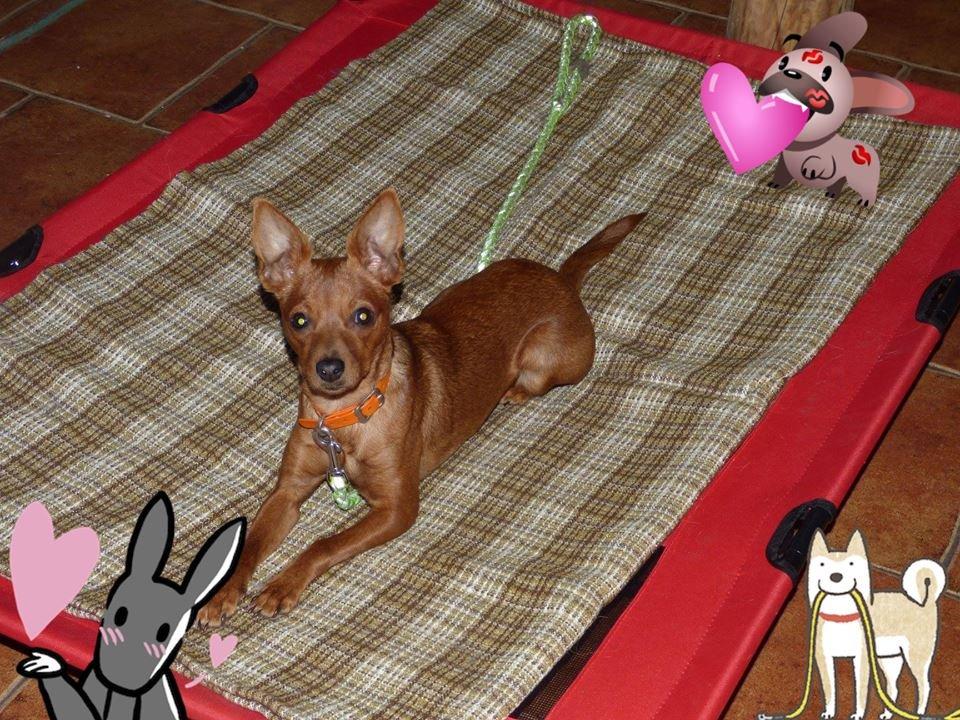 0cf7169167a Další psi v útulku Plemeno v útulcích Poptat psa