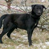65e47a7f5b4 Psi k adopci z útulků