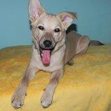 Psi k adopci z útulků 4de8d27751