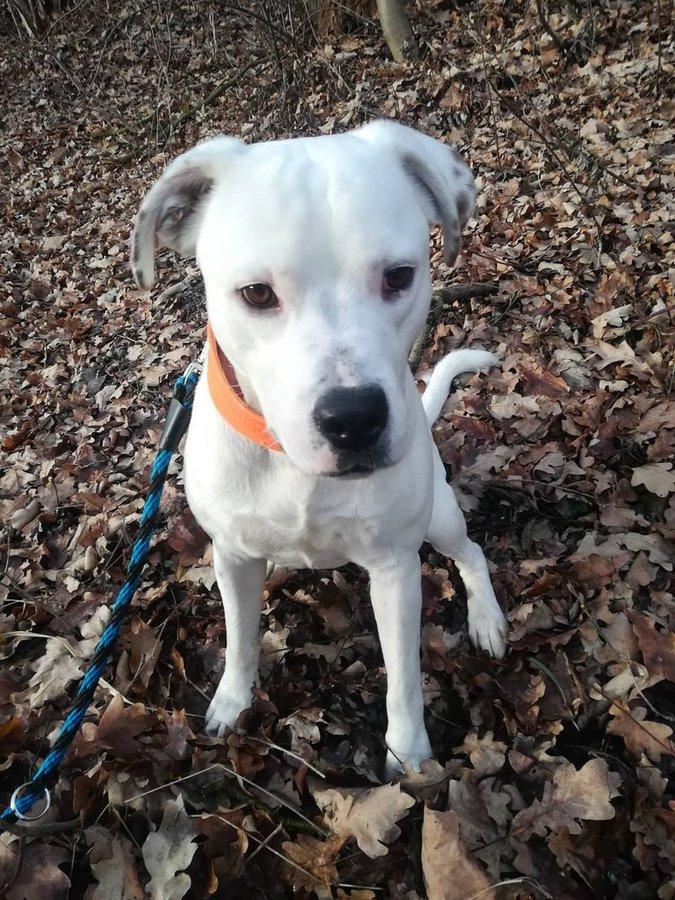 Další psi v útulku Plemeno v útulcích Poptat psa 086ca0c625f