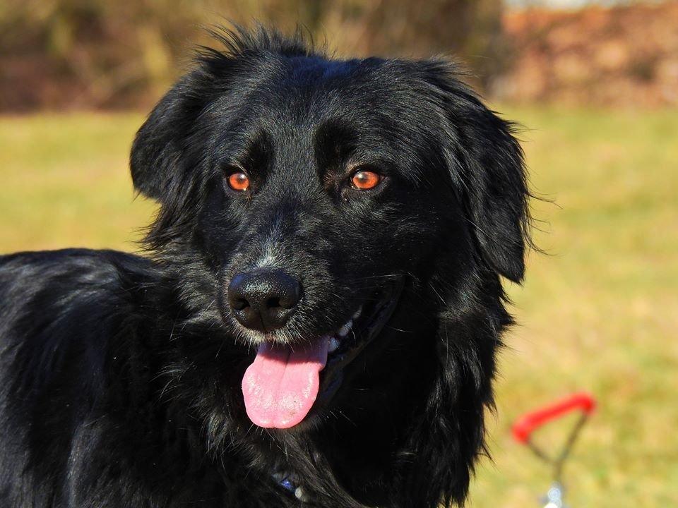 8da5c504531 Další psi v útulku Plemeno v útulcích Poptat psa