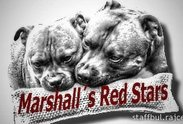 Logo: Marshall´s Red Stars