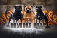 Logo: DOMIDAR DOGS
