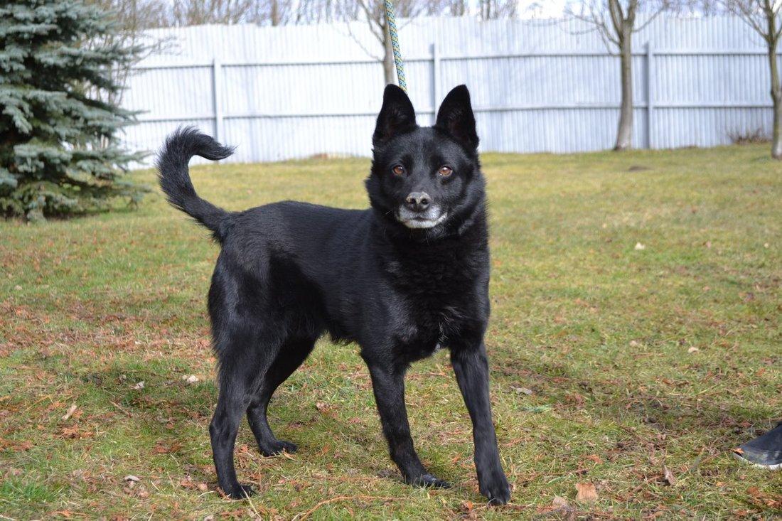 Psi k adopci z útulků 7721b8f2ec